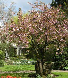 Baum Japanischer Garten Leverkusen bekleiben Wörterbücher